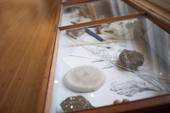 Forsmag på det nye naturhistoriske museum på Geologisk Museum. Foto: Helene Johanne Christensen